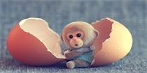 猴年吉祥物,超cute小猴子陪你一起过年!